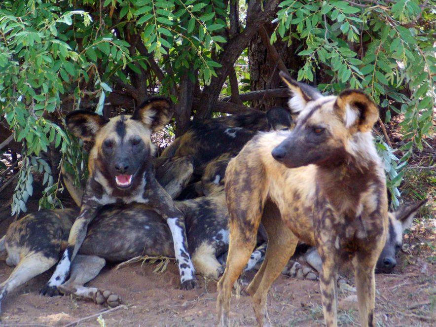 Safari Groepsreis Lodges - 13 DAGEN HET BESTE VAN ZUID-AFRIKA 117