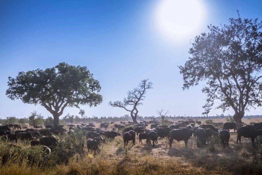 Safari Groepsreis Lodges 8 dagen botswana okavango delta en victoria falls avontuurlijk 58