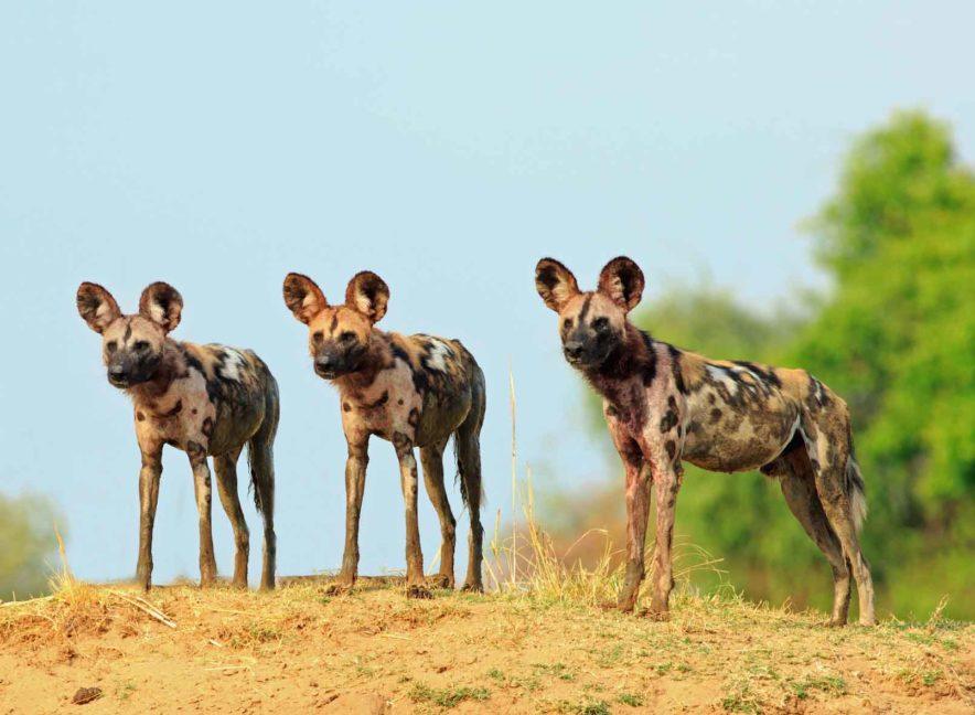 Safari Groepsreis Lodges 8 dagen botswana okavango delta en victoria falls avontuurlijk 37