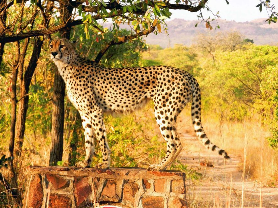 Safari Groepsreis Lodges - 13 DAGEN HET BESTE VAN ZUID-AFRIKA 53