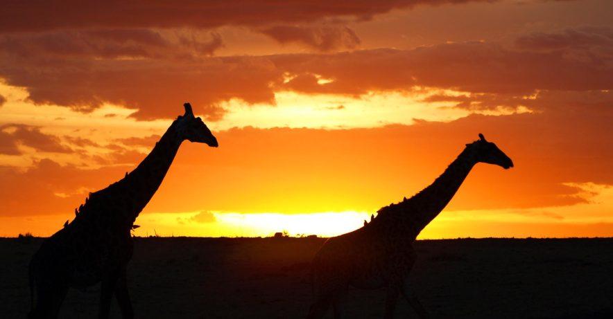 Safari Groepsreis Lodges - 14 DAGEN WINDHOEK, BOTSWANA, VICTORIA FALLS, ZIMBABWE, JOHANNESBURG 130