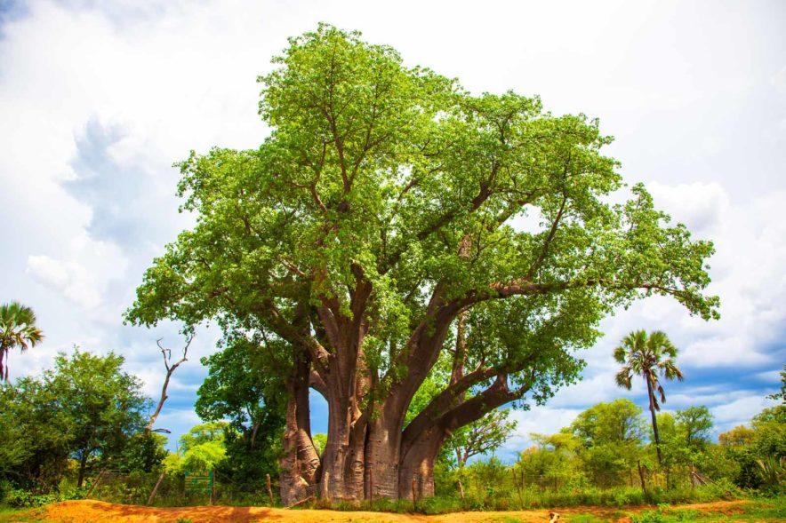 Safari Groepsreis Lodges - 14 DAGEN WINDHOEK, BOTSWANA, VICTORIA FALLS, ZIMBABWE, JOHANNESBURG 134