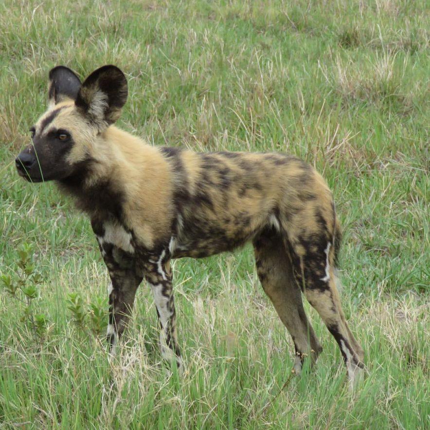 Safari Groepsreis Lodges - 14 DAGEN WINDHOEK, BOTSWANA, VICTORIA FALLS, ZIMBABWE, JOHANNESBURG 145