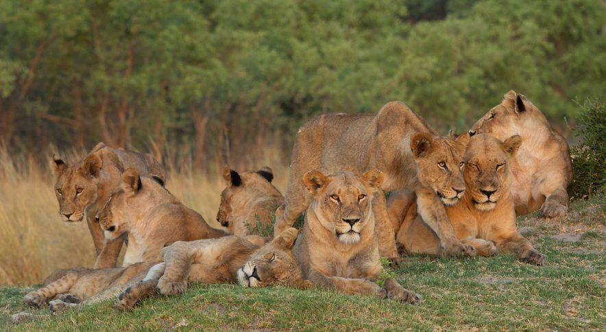 Safari Groepsreis Lodges - 14 DAGEN WINDHOEK, BOTSWANA, VICTORIA FALLS, ZIMBABWE, JOHANNESBURG 147