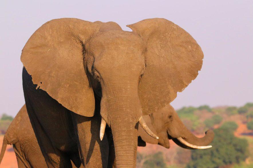 Safari Groepsreis Lodges - 14 DAGEN WINDHOEK, BOTSWANA, VICTORIA FALLS, ZIMBABWE, JOHANNESBURG 148