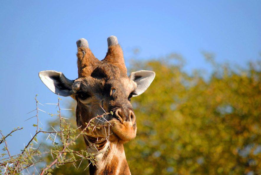 Safari Groepsreis Lodges - 14 DAGEN WINDHOEK, BOTSWANA, VICTORIA FALLS, ZIMBABWE, JOHANNESBURG 150