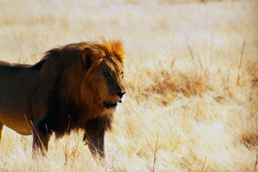 Safari Groepsreis Lodges - 14 DAGEN WINDHOEK, BOTSWANA, VICTORIA FALLS, ZIMBABWE, JOHANNESBURG 153