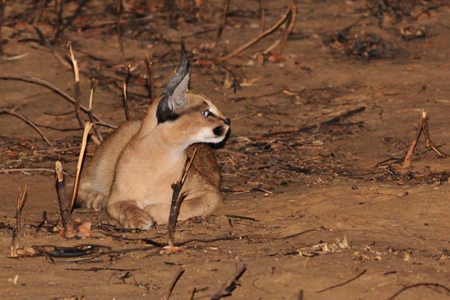Safari Groepsreis Lodges - 14 DAGEN WINDHOEK, BOTSWANA, VICTORIA FALLS, ZIMBABWE, JOHANNESBURG 166