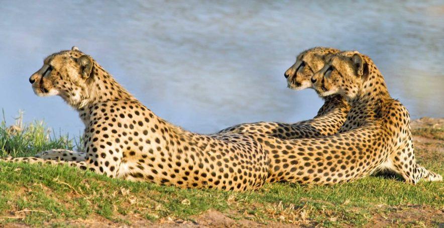 Safari Groepsreis Lodges - 14 DAGEN WINDHOEK, BOTSWANA, VICTORIA FALLS, ZIMBABWE, JOHANNESBURG 158