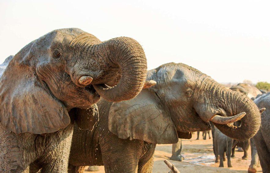 Safari Groepsreis Lodges - 14 DAGEN WINDHOEK, BOTSWANA, VICTORIA FALLS, ZIMBABWE, JOHANNESBURG 159