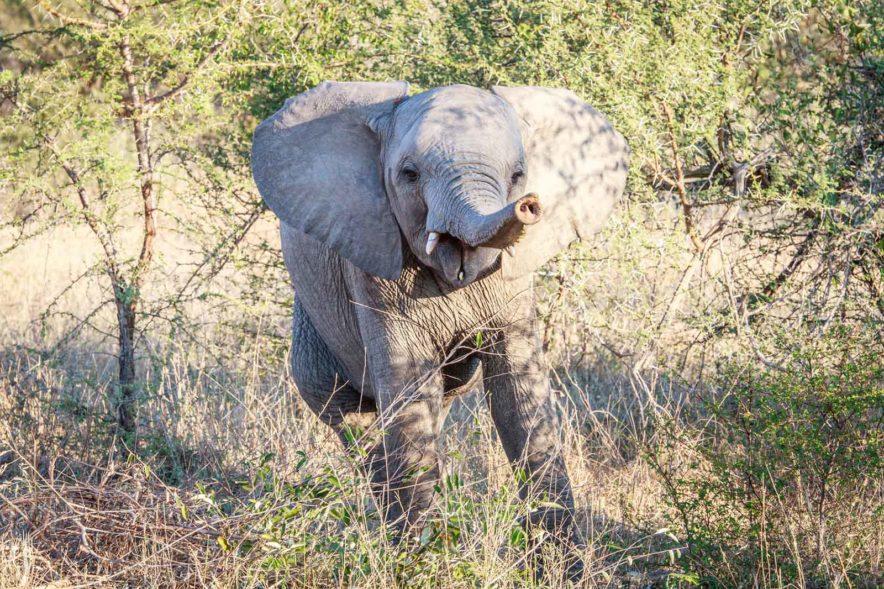Safari Groepsreis Lodges - 14 DAGEN WINDHOEK, BOTSWANA, VICTORIA FALLS, ZIMBABWE, JOHANNESBURG 160