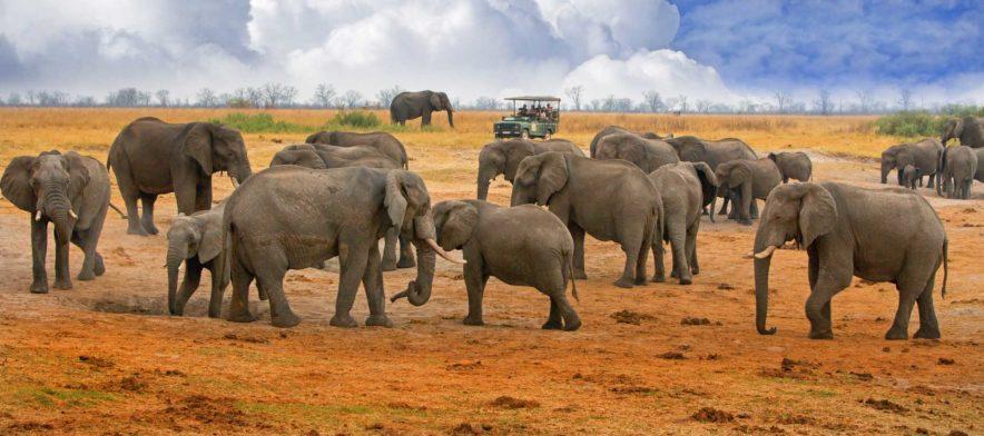 Safari Groepsreis Lodges - 14 DAGEN WINDHOEK, BOTSWANA, VICTORIA FALLS, ZIMBABWE, JOHANNESBURG 161