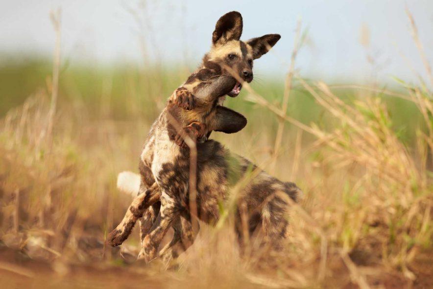 Safari Groepsreis Lodges - 14 DAGEN WINDHOEK, BOTSWANA, VICTORIA FALLS, ZIMBABWE, JOHANNESBURG 163