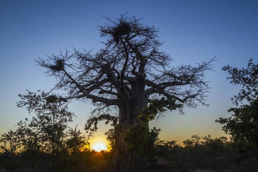 Safari Groepsreis Lodges - 14 DAGEN WINDHOEK, BOTSWANA, VICTORIA FALLS, ZIMBABWE, JOHANNESBURG 165