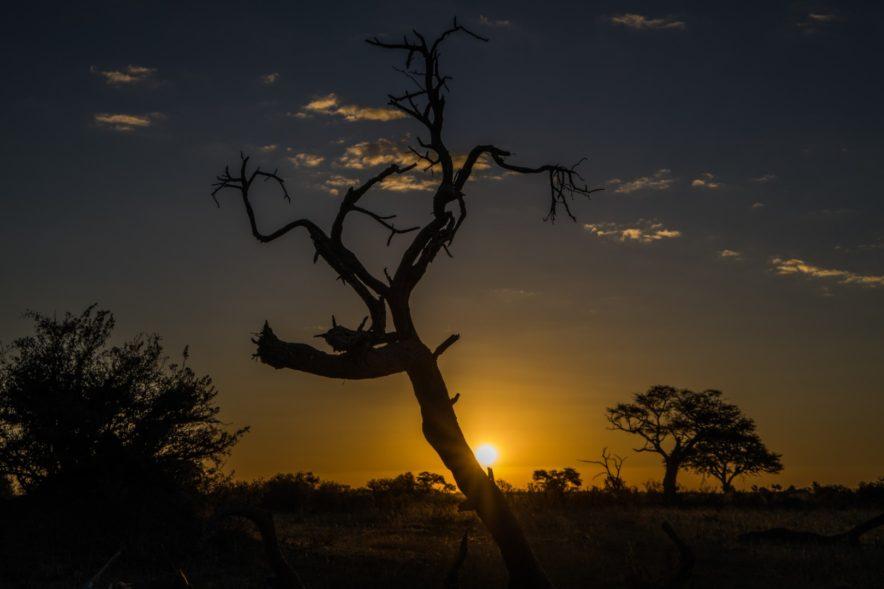 Safari Groepsreis Lodges - 20 DAGEN NAMIBIË, BOTSWANA & VICTORIA FALLS - Ontdekking 92