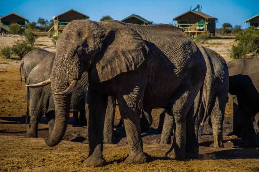 Safari Groepsreis Lodges - 20 DAGEN NAMIBIË, BOTSWANA & VICTORIA FALLS - Ontdekking 115