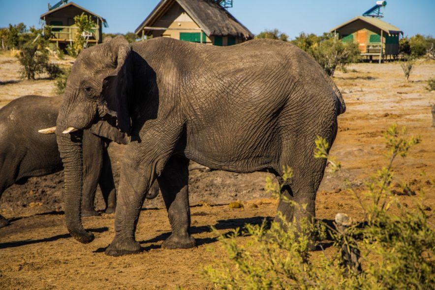 Safari Groepsreis Lodges - 20 DAGEN NAMIBIË, BOTSWANA & VICTORIA FALLS - Ontdekking 117