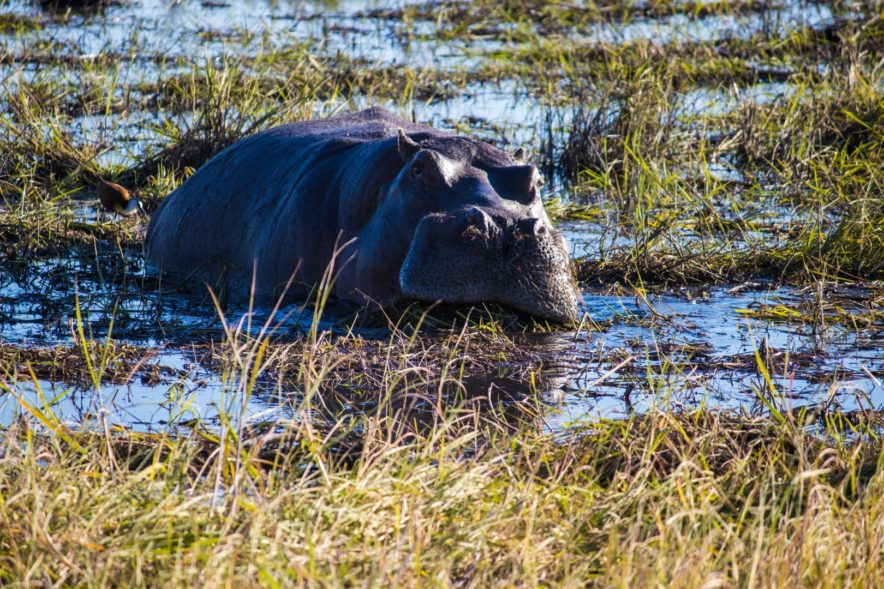 Safari Groepsreis Lodges - 20 DAGEN NAMIBIË, BOTSWANA & VICTORIA FALLS - Ontdekking 128