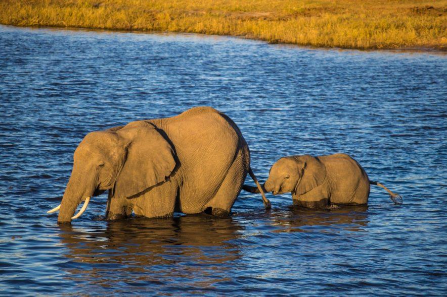 Safari Groepsreis Lodges - 20 DAGEN NAMIBIË, BOTSWANA & VICTORIA FALLS - Ontdekking 129