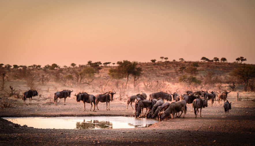Safari Groepsreis Lodges - 20 DAGEN NAMIBIË, BOTSWANA & VICTORIA FALLS - Ontdekking 152