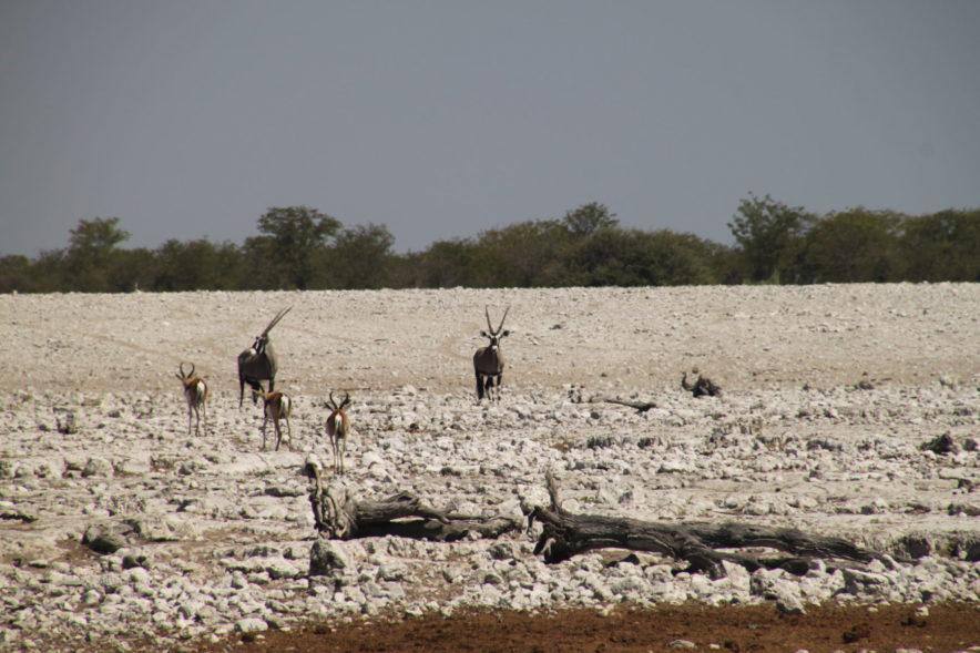 Safari Groepsreis Lodges - 20 DAGEN NAMIBIË, BOTSWANA & VICTORIA FALLS - Ontdekking 166