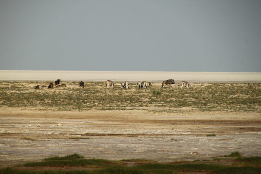 Safari Groepsreis Lodges - 20 DAGEN NAMIBIË, BOTSWANA & VICTORIA FALLS - Ontdekking 167