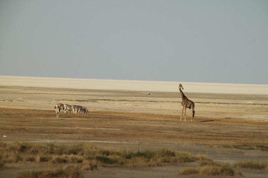Safari Groepsreis Lodges - 20 DAGEN NAMIBIË, BOTSWANA & VICTORIA FALLS - Ontdekking 168