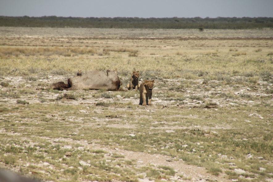 Safari Groepsreis Lodges - 20 DAGEN NAMIBIË, BOTSWANA & VICTORIA FALLS - Ontdekking 171