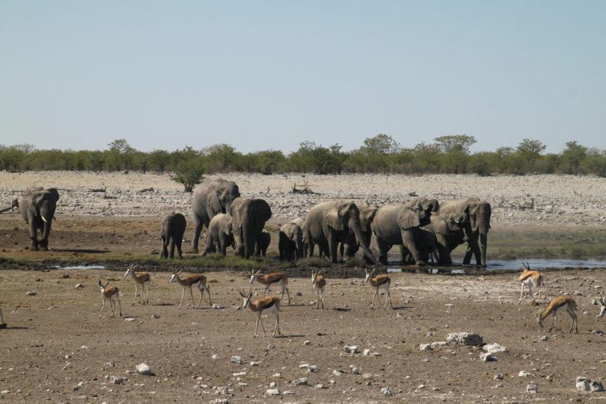 Safari Groepsreis Lodges - 20 DAGEN NAMIBIË, BOTSWANA & VICTORIA FALLS - Ontdekking 172