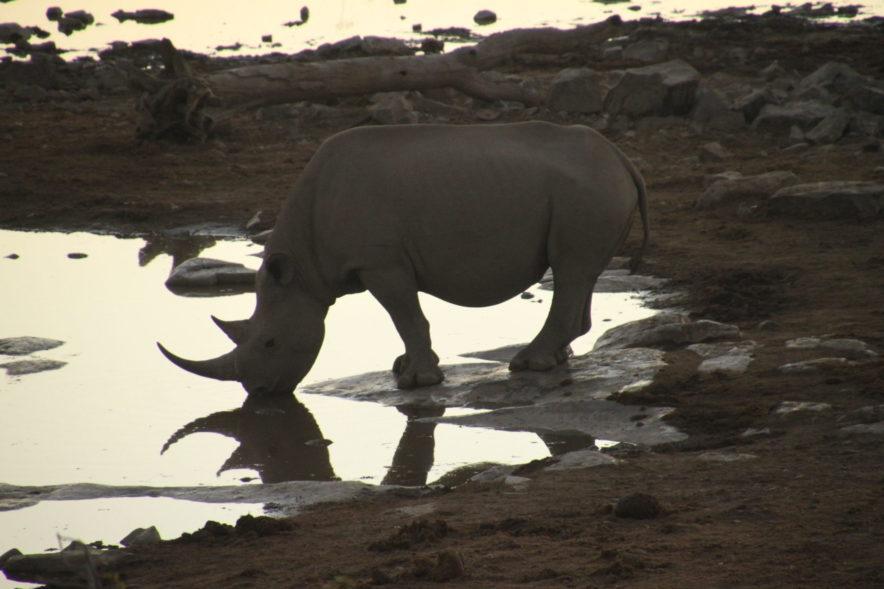 Safari Groepsreis Lodges - 20 DAGEN NAMIBIË, BOTSWANA & VICTORIA FALLS - Ontdekking 174